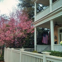 Trees and flowers are blooming in Charleston, SC