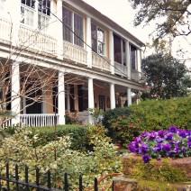 Flowers brighten up a winter garden in Charleston, SC