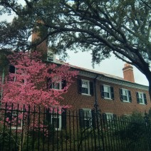Tree blossoming in Charleston, SC