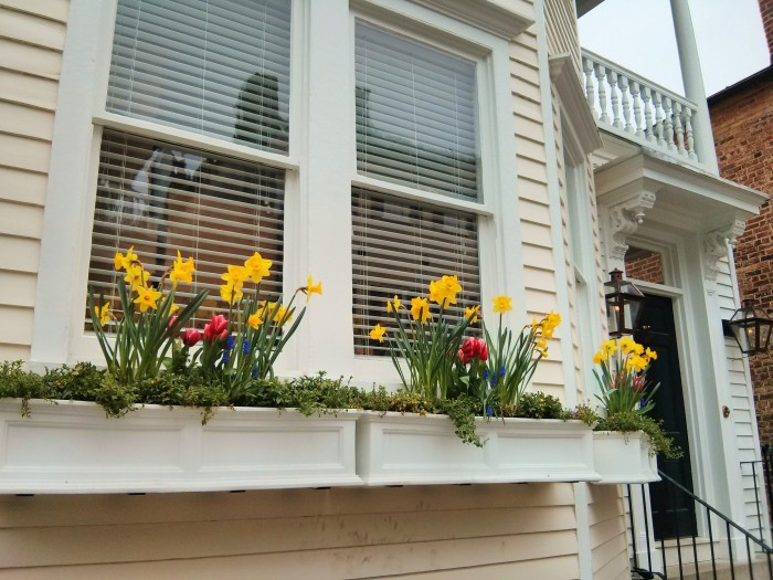 Some beautiful flower boxes with a very spring-like feel in Charleston, SC.