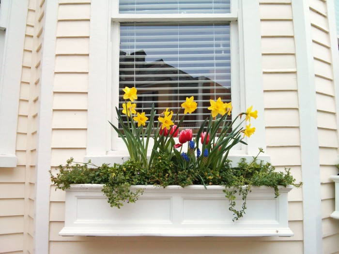 A beautiful Charleston, SC flower box with historic reflections behind it.