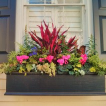 Charleston is full of amazing flower boxes.