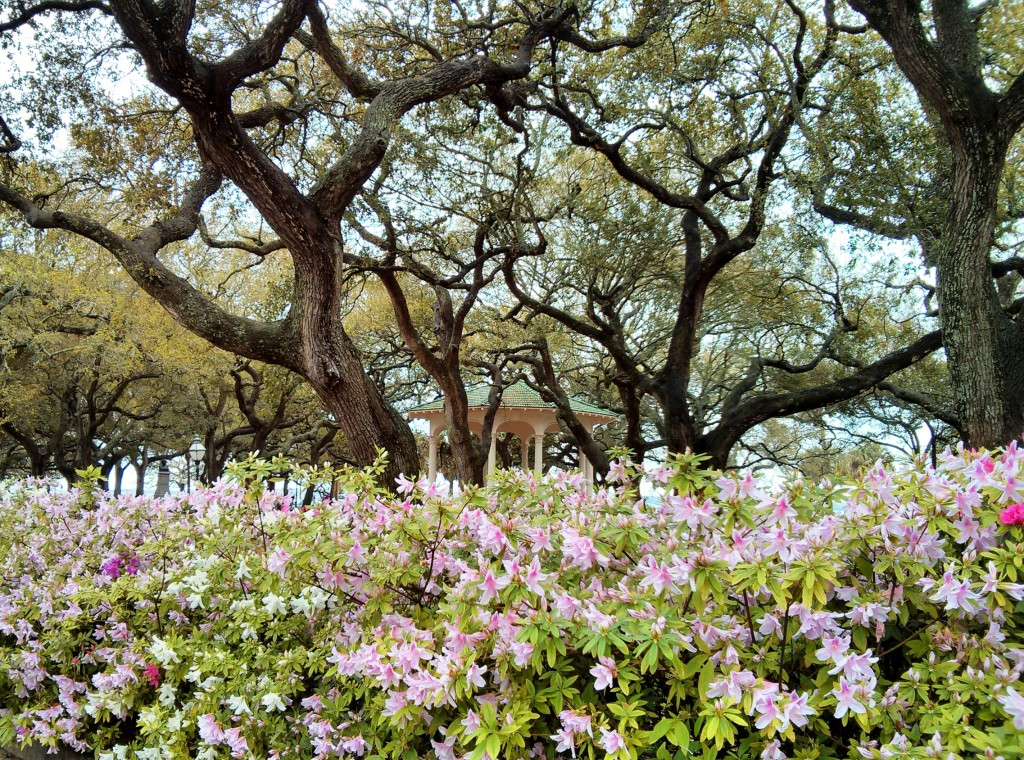 White Point Garden in Charleston, SC is beautiful any time time the year, but when the azaleas are blooming it is really special.
