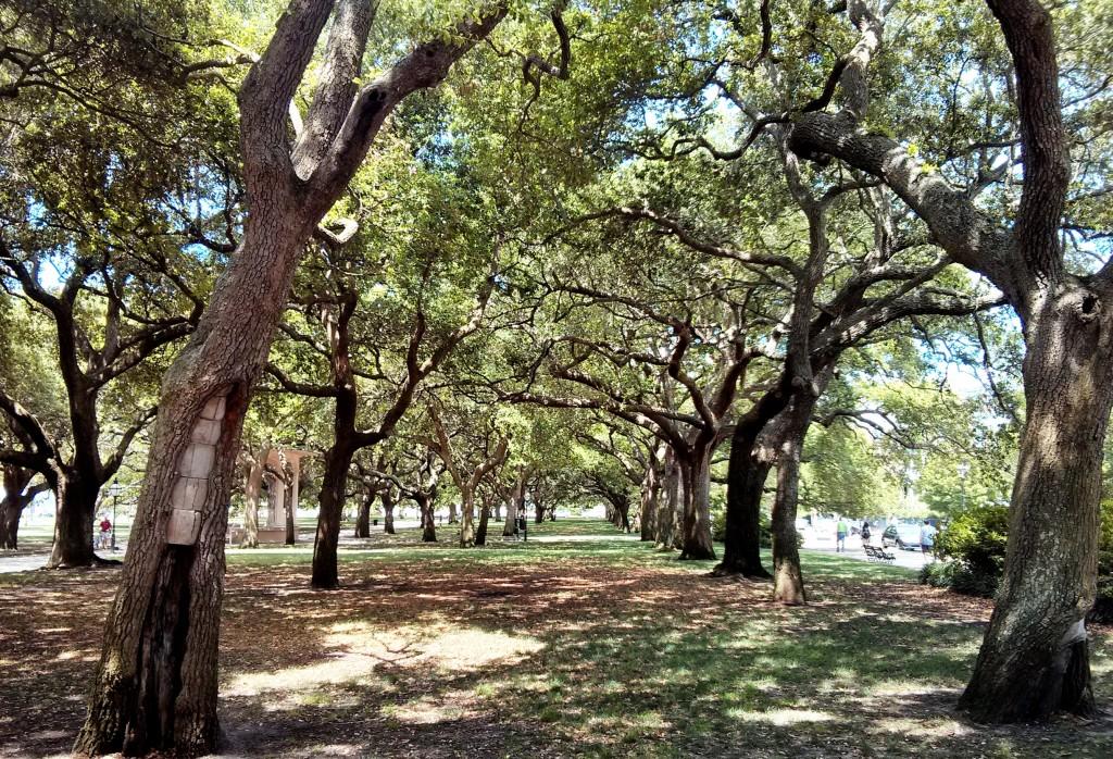 White Park Garden in Charleston, SC is full of spectacular Live Oak trees.