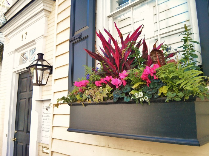 With many of the houses fronting directly on to the sidewalk in Charleston, flower boxes become the de facto front yard -- and a lot of effort goes into them!