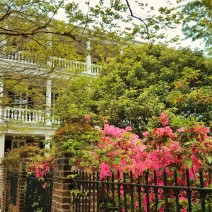 The azaleas in Charleston are always beautiful... even more so when set against an iron fence and a wonderful house.