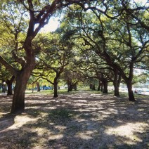 White Point Garden, at the tip of the Charleston, SC peninsula, is home to beautiful lines of Live Oak trees.