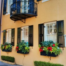 The flower boxes along Rainbow Row in Charleston, SC are spectacular.