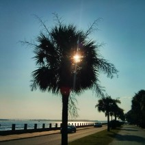 On a very hot, sticky day, the sun starting to go down along the Low Battery in Charleston, SC.