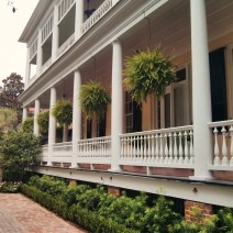 "These ""fern balls"" adorn the piazza of a beautiful Charleston single house, which has beautiful iron gates as well."