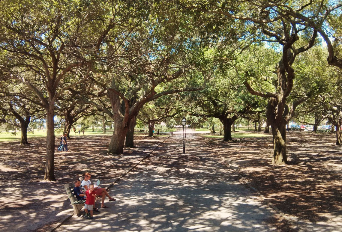 Live Oaks - Glimpses of Charleston