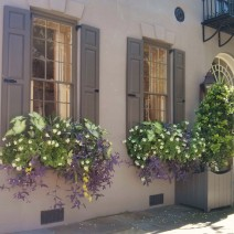 Just because it is officially fall in Charleston, SC, it doesn't mean the flowerboxes aren't thriving.