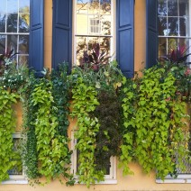 Window boxes in Charleston, SC sometimes take the place of front yards. This is a heck of a front yard!