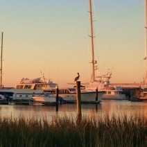 A pelican watching the sun come up at the City Marina in Charleston, SC. Beautiful.