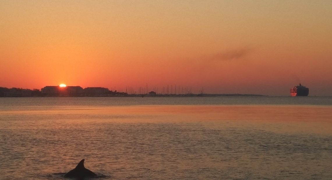 Charleston Harbor is a fascinating place. Even at sunrise there can be lots of activity -- cargo ships from all over the world come and go, and the dolphins hunt for their breakfast.