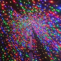"""The Charleston Christmas """"Tree"""" on Marion Square is created each year out of lights. The cool thing is that you can go inside it and experience it from this unusual perspective."""
