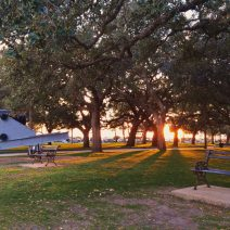 The sun setting through the Live Oak trees at White Point Garden. The cannons there are favorite items for kids of all ages to climb on.