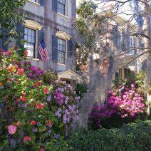 Azaleas and Spanish Moss frame a beautiful house flying an American flag... classic Charleston.
