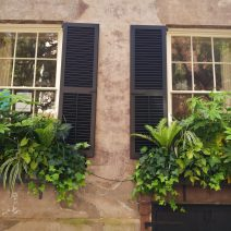 With so many Charleston houses built right up the the sidewalk edge, window boxes often act as a decorative front yard. There are many wonderful examples, including this very green pair on Legare Street.