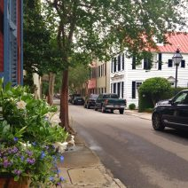 The lushness of Charleston is captured on Tradd Street, just off Church Street.