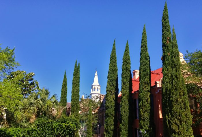 St. Michael's steeple is one of the most prominent and picturesque in Charleston. At this angle, it is framed by some beautiful Italian Cypresses found in St. Michael's Alley.