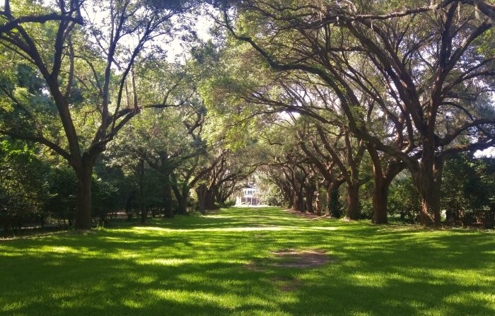 A beautiful live oak allee, or alley, at Charlestowne Landing -- with the Legare-Waring House at the end. Spectacular.
