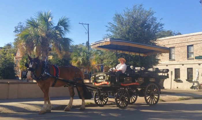 One of the great ways to see Charleston, and learn about the city and its history, is to take one of the carriage tours.