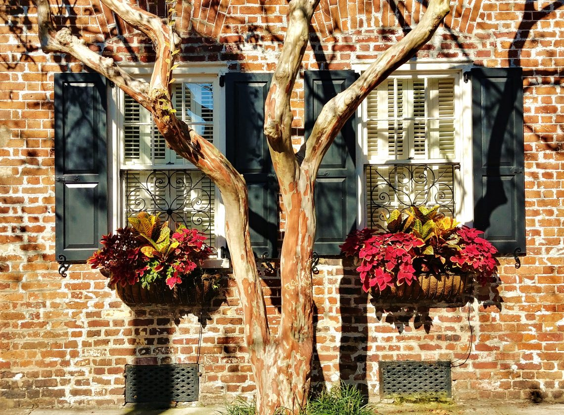 This beautiful combination of textures and colors sings Happy Thanksgiving! This wonderful scene can be found on Tradd Street. Glimpses hopes you all have a festive, food-filled and fantastic day.