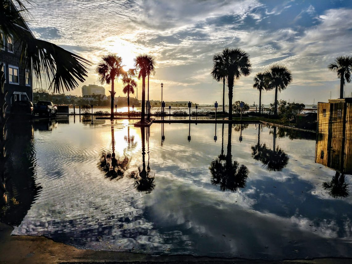 Being part of the Lowcountry sometimes makes life in Charleston a little wet. The King Tide causing flooding, but also creates a gorgeous mirror some for some of the local palmetto trees.