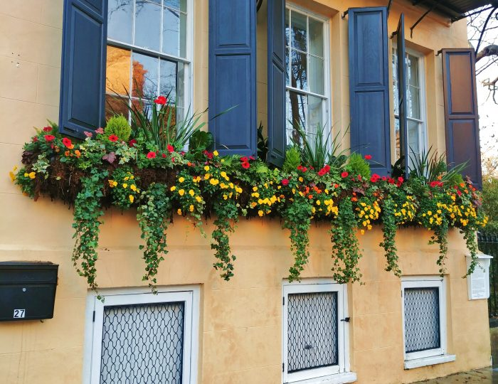 These beautiful flower boxes hang on the front of the youngest of the houses known as the Three Sisters on Meeting Street. Built following the Revolutionary War, this house is distinguished from its sisters who were constructed before the Revolution.
