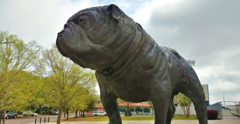 This little pooch can be found outside of the Citadel's Stadium, honoring the the Citadel Bulldogs. The stadium is named after Brigader General Johnson Hagood, who commanded the Confederate forces in Charleston during the Civil War and later became the governor of South Carolina. Nice puppy.