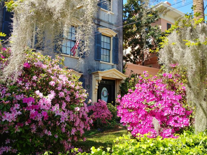 This wonderful spring scene on Rutledge Avenue is set in front of a house that was built in 1850 by a transplanted New Englander, James Taylor. While sharing the name, he was not inducted into the Rock & Roll Hall of Fame in 2000 -- that was this James Taylor, who had Carolina in his mind (NC, but close enough).