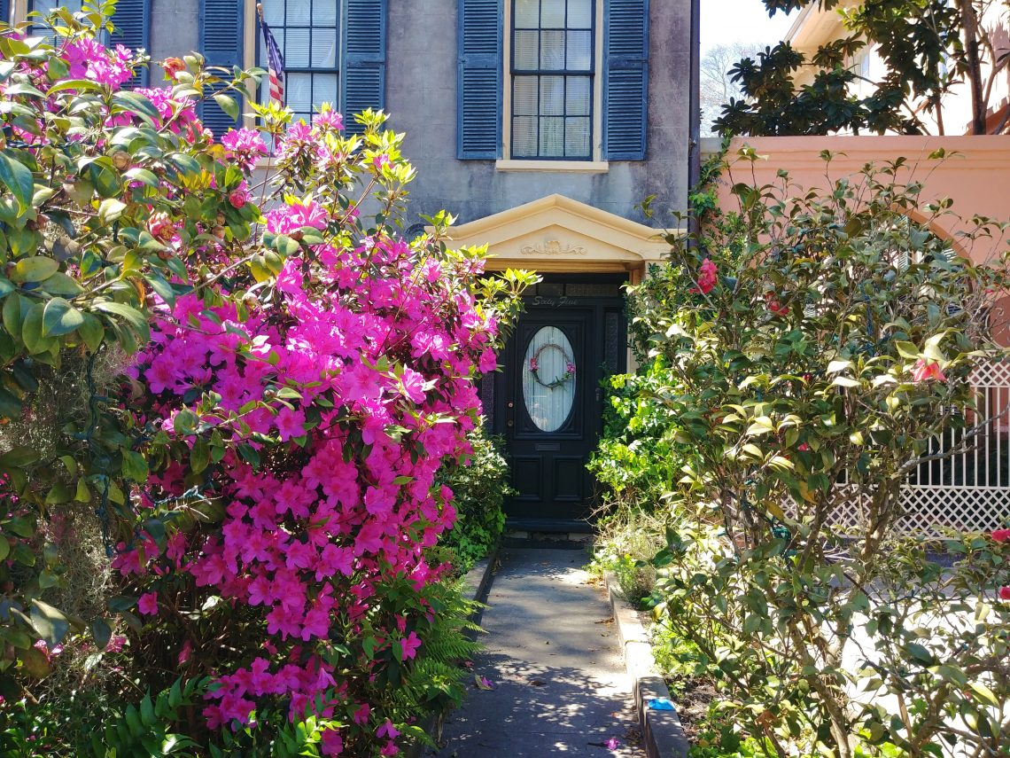 An inviting Charleston entry on Rutledge Avenue. And blooming azaleas make anything look more welcoming.