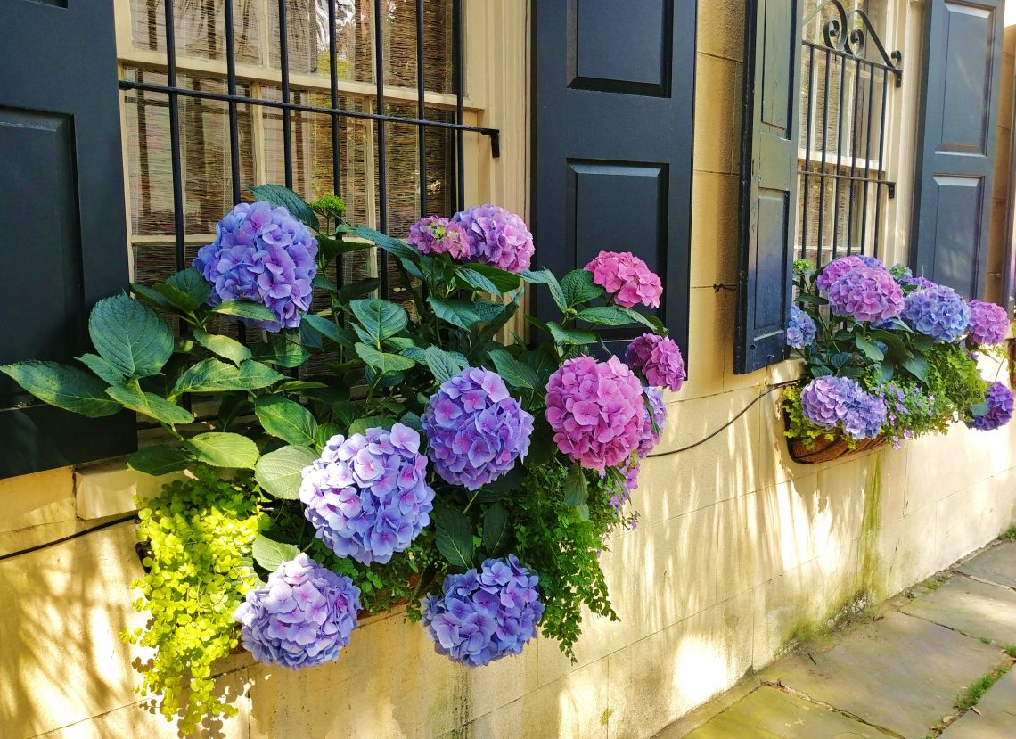 With many Charleston houses fronting right up to the sidewalk, window boxes play a big role as really small front yards. These beautiful ones can be found on Legare Street, where the rest of the yards are pretty big!