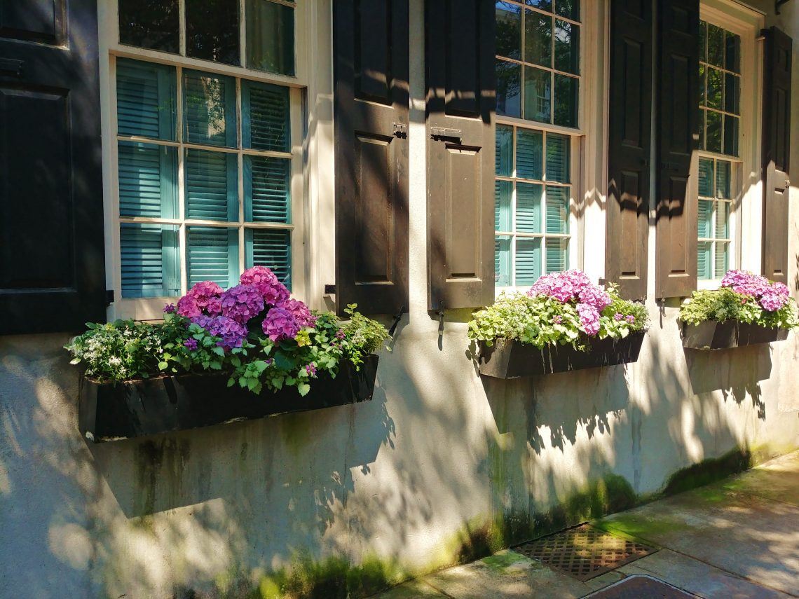 "These wonderful window boxes, featuring some gorgeous hydrangeas, are located on Church Street across from ""goat. sheep. cow."" -- a cool little wine and cheese shop (which now has a larger younger sister on upper Meeting Street -- but no hydrangeas)."