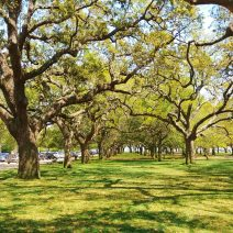 White Point Garden, one of the wonderful public spaces in Charleston, is full of beautiful Live Oaks. Have you played beneath their branches?
