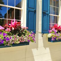 In addition to being beautiful, Charleston window boxes sometimes double as the front yard. These, which are right on the sidewalk of King Street, are particularly eye-catching.