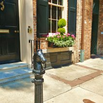 Beautiful window boxes and the Dock Street Theater are just behind this horse on Church Street. Have you tied up there?