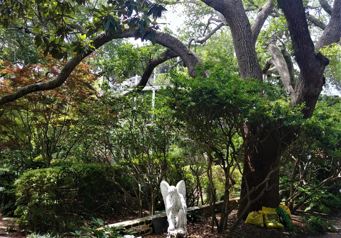 This earthbound angel, being lit by a ray of sun penetrating the shade from the beautiful live oak tree, can be found on Gibbes Street -- with the Parker-Drayton House looming in the background.