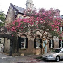 This house on Bull Street stirs memories of France. The stucco over the masonry structure is nicely accented by a beautiful crepe myrtle tree.