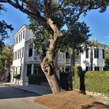 Charleston loves its old trees about as much as it loves its old houses. This live oak is well tended to and adds character to Legare Street.