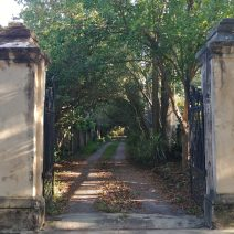 These columns and gates on Tradd Street open up on to what looks like a country lane, but is just a driveway in the South of Broad neighborhood. Charleston is full of all sorts of surprises.