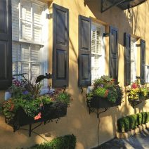 These pretty window boxes can be found on the front of one of the 13 connected Georgian houses that make up the iconic Rainbow Row on East Bay Street. A classic Charleston winter scene.