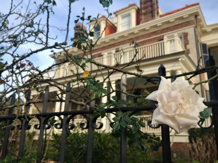 A beautiful winter rose against the backdrop of the very first house to be built on Murray Boulevard.