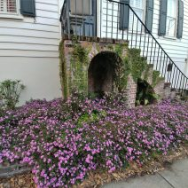 This beautiful overflowing flowerbed is a great accessory to a beautiful house on George Street built about 1790. The owner specified in his will in 1787 that the house be built for the benefit of his wife or daughters -- one of his daughters received it in 1791.