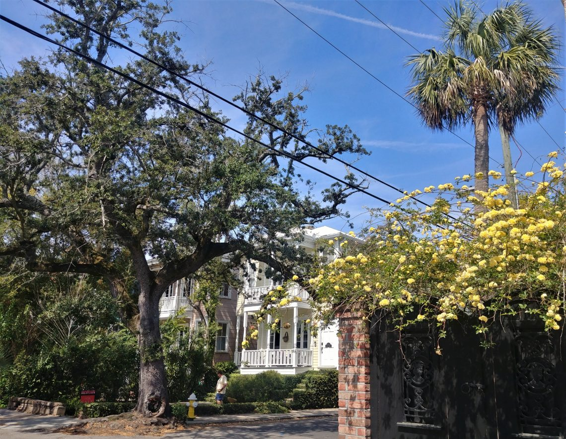 This pretty scene at the corner of Queen and Logan Streets is right across from the Queen Street Grocery-- one the best sources in Charleston for crepes and other great food.