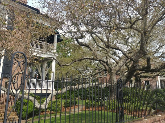 "This cool live oak tree dominates this yard on Murray Boulevard. Live oaks definitely help give Charleston and the Lowcountry much of its character. Live oaks have also played an important role in American history. During the War of 1812 the USS Constitution gained its nickname ""Old Ironsides"" because the British cannonballs just bounced off its hull -- which was made out of live oak wood."