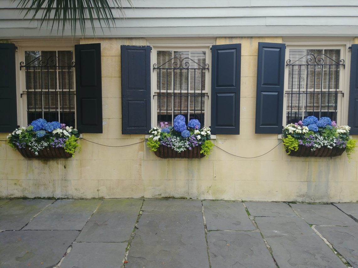 A classic Charleston sidewalk scene. This 1835 house on Legare Street has an amazing yard and garden, and still boasts some wonderful hydrangeas in window boxes. Always beautiful.