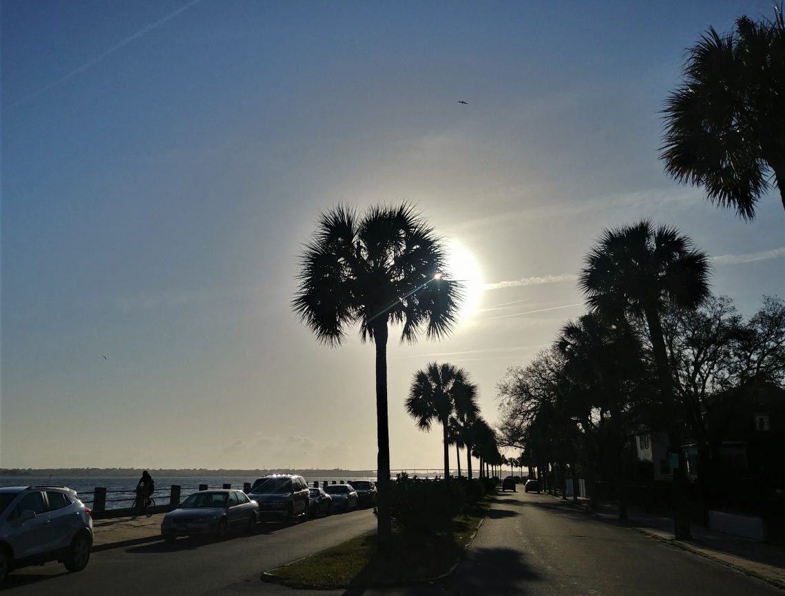 The sabal palmetto tree is the state tree of South Carolina. It was selected as the state tree to celebrate the role it played in the defeat of the British at Fort Moultrie during the lead up to the American Revolution. The fort, which was being bombarded by the British fleet, was constructed of palmetto logs.  The tree's spongy wood actually absorbed the energy of the cannonballs and caused them to just bounce off -- allowing the Americans to eventually drive the British ships away and win the inspiring battle.