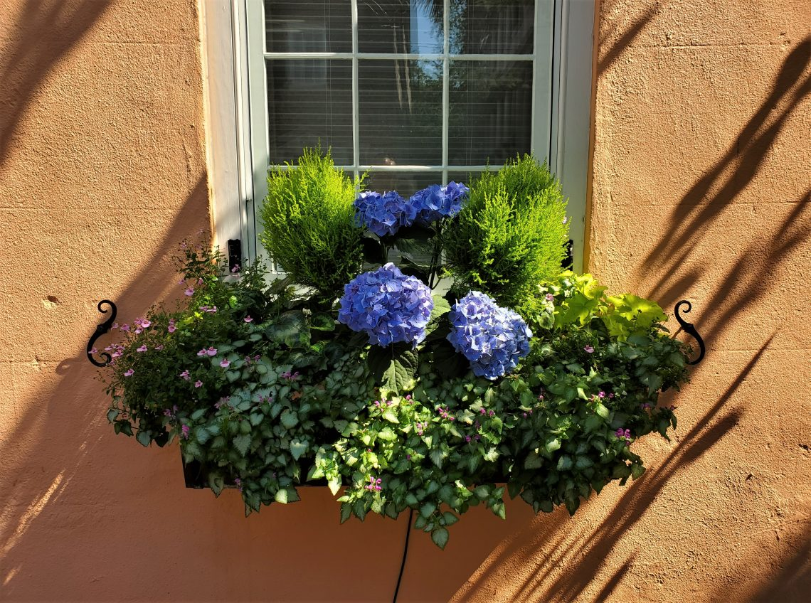 This beautiful Charleston window box features a gorgeous hydrangea. One of the cool things about hydrangeas is that they will change color depending on the pH of the soil they are in. You can actually manipulate it to have the plant display different color flowers.